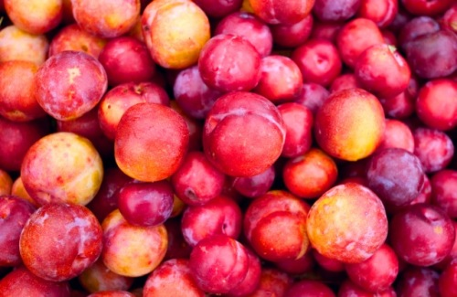 Plums from Farmers Market - Seeminglee